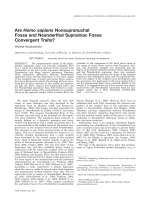 Are Homo sapiens nonsupranuchal fossa and neanderthal suprainiac fossa convergent traits.