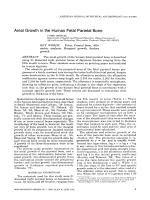 Areal growth in the human fetal parietal bone.