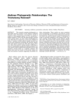 Atelinae phylogenetic relationships  The trichotomy revived.