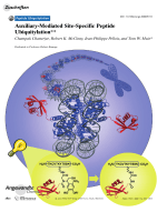 Auxiliary-Mediated Site-Specific Peptide Ubiquitylation.
