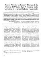 Axonal atrophy in sensory nerves of the diabetic BB-Wistar rat  A possible early correlate of human diabetic neuropathy.