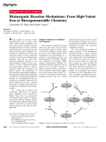 Bioinorganic Reaction Mechanisms  From High-Valent Iron to Bioorganometallic Chemistry.