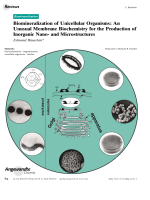 Biomineralization of Unicellular Organisms  An Unusual Membrane Biochemistry for the Production of Inorganic Nano- and Microstructures.