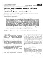 Blue light induces arsenate uptake in the protist Thraustochytrium.