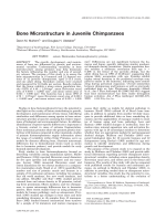 Bone microstructure in juvenile chimpanzees.