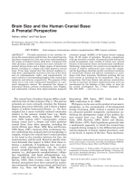 Brain size and the human cranial base  A prenatal perspective.