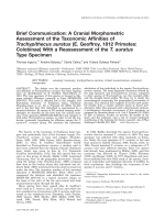Brief communication  A cranial morphometric assessment of the taxonomic affinities of Trachypithecus auratus (E. Geoffroy  1812 primates  Colobinae) with a reassessment of the T