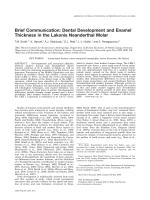 Brief communication  Dental development and enamel thickness in the Lakonis Neanderthal molar.