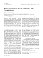 Brief communication  New reconstruction of the Taung endocast.