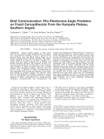 Brief communication  Plio-Pleistocene eagle predation on fossil cercopithecids from the Humpata Plateau  southern Angola.