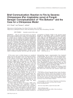 Brief communication  Reaction to fire by savanna chimpanzees (Pan troglodytes verus) at Fongoli  Senegal  Conceptualization of Уfire behaviorФ and the case for a chimpanzee model.