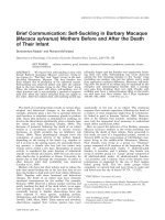 Brief communication  Self-suckling in Barbary macaque (Macaca sylvanus) mothers before and after the death of their infant.