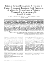 Calcium-permeable -amino-3-hydroxy-5-methyl-4-isoxazole propionic acid receptors  A molecular determinant of selective vulnerability in amyotrophic lateral sclerosis.