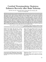 Cerebal norepinephrine depletion enhances recovery after brain ischemia.