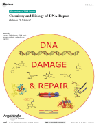 Chemistry and Biology of DNA Repair.
