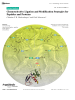 Chemoselective Ligation and Modification Strategies for Peptides and Proteins.