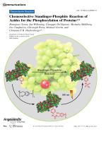 Chemoselective Staudinger-Phosphite Reaction of Azides for the Phosphorylation of Proteins.