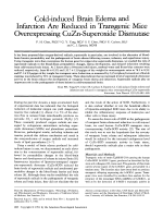 Cold-induced brain edema and infarction are reduced in transgenic mice overexpressing CuZn-Superoxide dismutase.