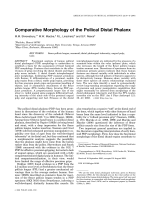 Comparative morphology of the pollical distal phalanx.
