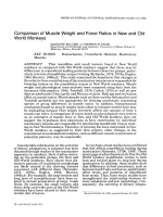 Comparison of muscle weight and force ratios in new and old world monkeys.