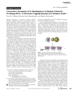 Consecutive Formation of G-Quadruplexes in Human Telomeric-Overhang DNA  A Protective Capping Structure for Telomere Ends.