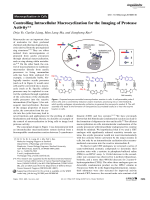 Controlling Intracellular Macrocyclization for the Imaging of Protease Activity.