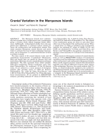 Cranial variation in the Marquesas Islands.