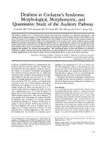 Deafness in Cockayne's syndrome  Morphological  morphometric  and quantitative study of the auditory pathway.