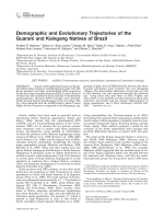 Demographic and evolutionary trajectories of the Guarani and Kaingang natives of Brazil.
