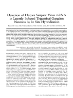 Detection of herpes simplex virus mRNA in latently infected trigeminal ganglion neurons by in situ hybridization.