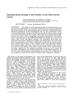 Developmental change in the position of the fetal human larynx.