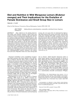 Diet and nutrition in wild mongoose lemurs (Eulemur mongoz) and their implications for the evolution of female dominance and small group size in lemurs.
