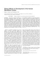 Dietary effects on development of the human mandibular corpus.