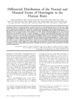 Differential distribution of the normal and mutated forms of huntingtin in the human brain.