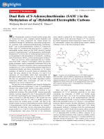 Dual Role of S-Adenosylmethionine (SAM+) in the Methylation of sp2-Hybridized Electrophilic Carbons.