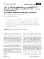 Effect of different organotin compounds on DNA of gilthead sea bream (Sparus aurata) erythrocytes assessed by the comet assay.