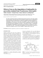 Effects of iron on the degradation of triphenyltin by pyoverdins isolated from Pseudomonas chlororaphis.