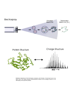 Electrospray Mass Spectrometry of Biomacromolecular Complexes with Noncovalent InteractionsЧNew Analytical Perspectives for Supramolecular Chemistry and Molecular Recognition Processes.