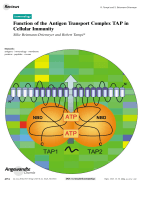 Function of the Antigen Transport Complex TAP in Cellular Immunity.