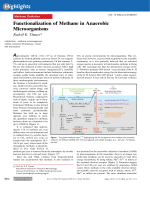 Functionalization of Methane in Anaerobic Microorganisms.