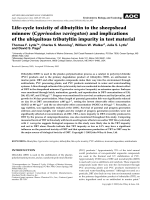 Life-cycle toxicity of dibutyltin to the sheepshead minnow (Cyprinodon variegatus) and implications of the ubiquitous tributyltin impurity in test material.