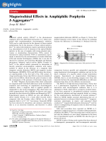 Magnetochiral Effects in Amphiphilic Porphyrin J-Aggregates.