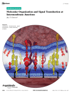 Molecular Organization and Signal Transduction at Intermembrane Junctions.