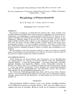 Morphology of polyacrylonitrile.
