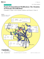 Protein Posttranslational Modifications  The Chemistry of Proteome Diversifications.