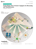 Semisynthetic DNAЦProtein Conjugates for Biosensing and Nanofabrication.