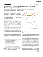 Site-Specific and Stoichiometric Modification of Antibodies by Bacterial Transglutaminase.