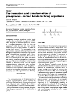 The formation and transformation of phosphorusЦcarbon bonds in living organisms.