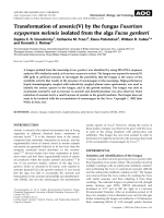 Transformation of arsenic(V) by the fungus Fusarium oxysporum melonis isolated from the alga Fucus gardneri.