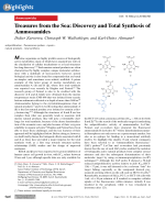 Treasures from the Sea  Discovery and Total Synthesis of Ammosamides.